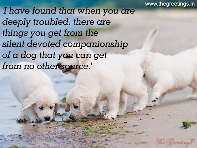 Dog Quote Picture Quote