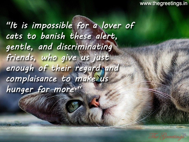 Quotes about My Pet Cat