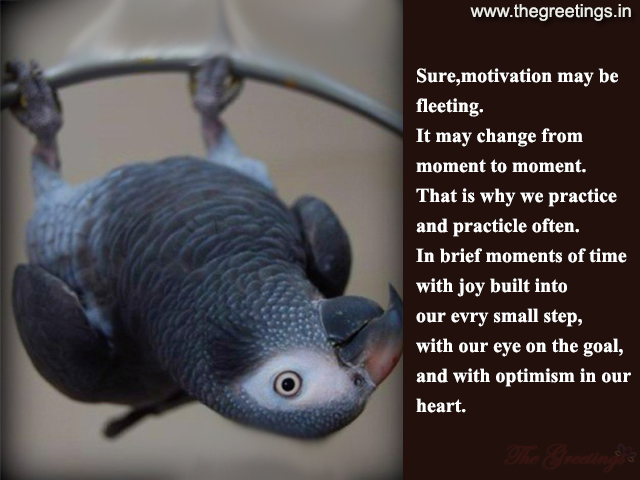 Quotes about Pet parrots