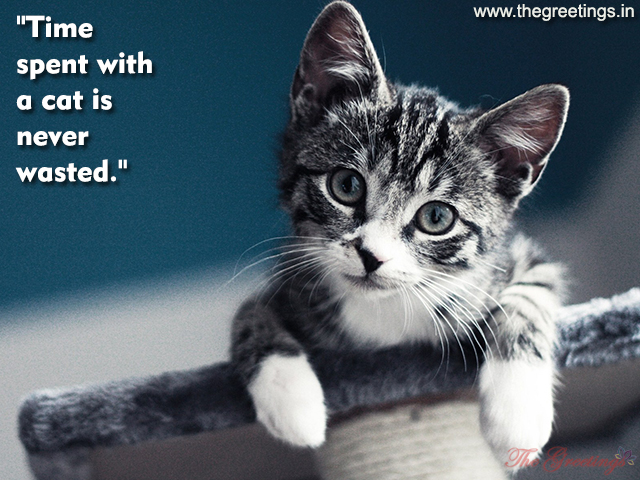 pet top cats quotes