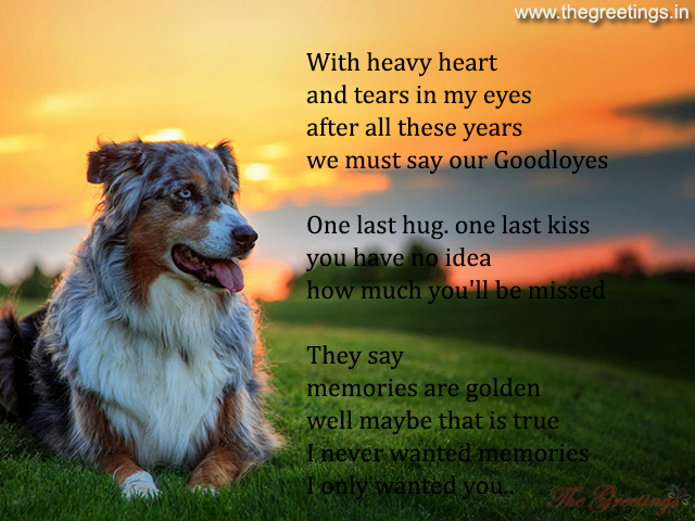 sayings about puppies pet